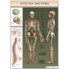 Bones system